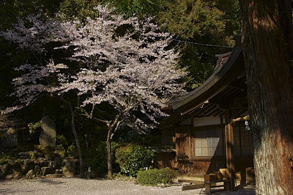 丹生川上神社中社 (2).jpg