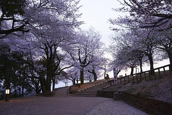 若草山夜景 (3).jpg