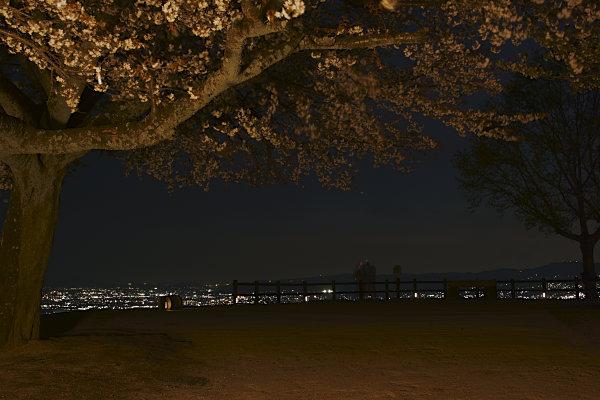 若草山夜景 (31).jpg