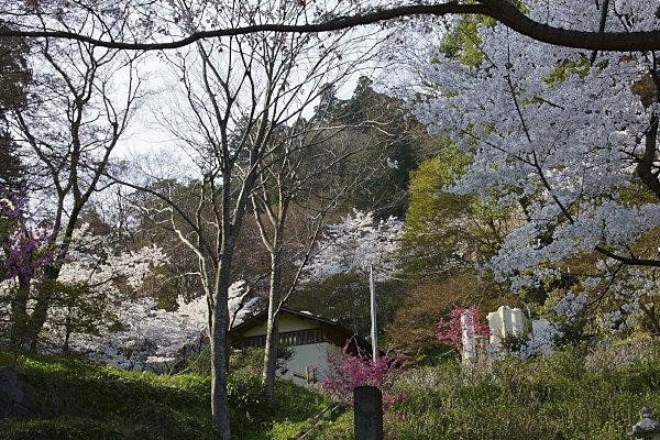 談山神社 (2).jpg